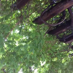 蔦の木陰で、ひと休み