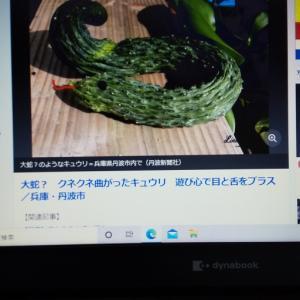 蛇かと、ちょっとびびったけど!?