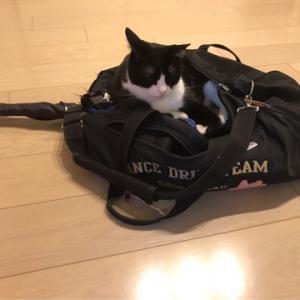 猫ドラムバック