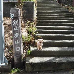 2020年8月9日 剣山登山(キレンゲショウマ見ごろ)