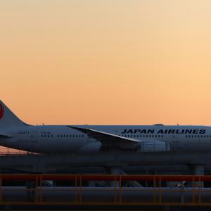 伊丹行きの JAL Dreamliner