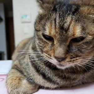 Loveにゃん☆私は猫に育てられた!?の巻~