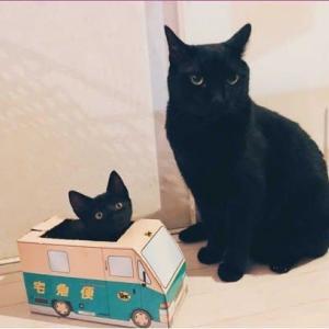 拝借画像☆ヤマト運輸の箱に入った黒い仔猫の巻~