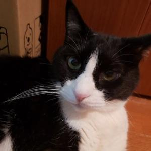猫は人間の身体の機能をどこまで理解しているのか?の巻~