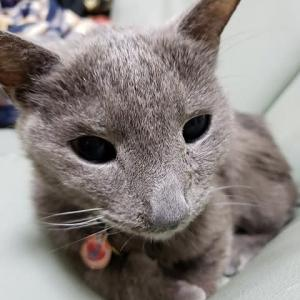 コメonにしました。猫の腎臓・心臓病、扁平上皮癌についての情報をお願いします(祈)