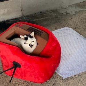 相方も参加している地域猫活動下の猫達