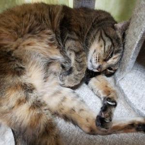 眠るアンモナイト