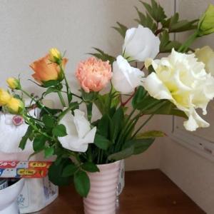 今週のお花&あちゃさん、ベッドマットに引っ掛かる