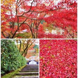 紅葉の京都へ VOL2