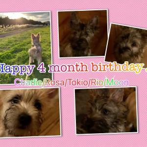 Happy 4 month birthday♪