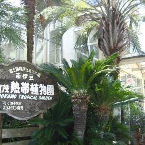 熱帯の楽園【下賀茂熱帯植物園】