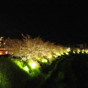 南伊豆みちくさ【夜桜マラソン大会】