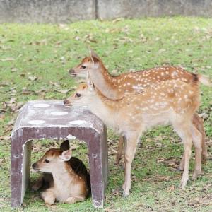 バンビに会いたい