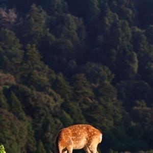ひたすら食べる鹿三選