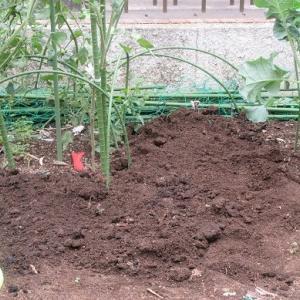 種まき  ジャガイモ植え込み