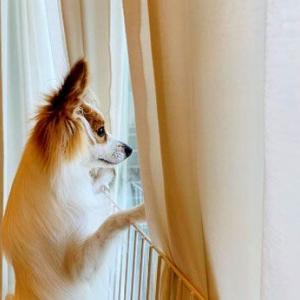 玄関で主人の帰りを待つ愛犬の話