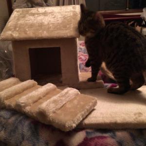 トラさんのキャットタワーを作ろう