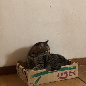 箱入りトラさん