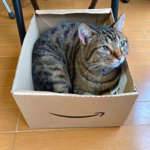 箱好きトラさん