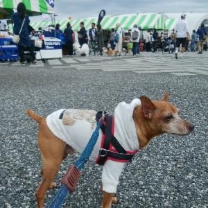 駒沢わんこ祭りへ
