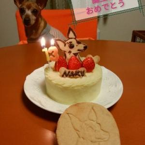 ナル13歳おめでとう!