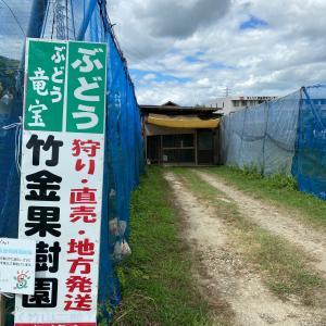 竜宝〜竹金果樹園