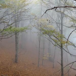 秋色に染まるカタルーニャ。VicのCabreraへ