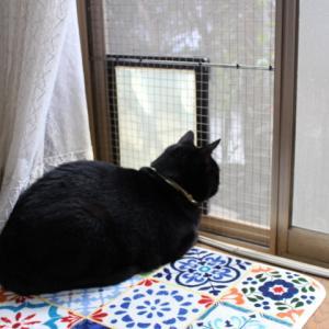 仔猫をぴゃーぴゃー鳴かせないでくださいと言う話