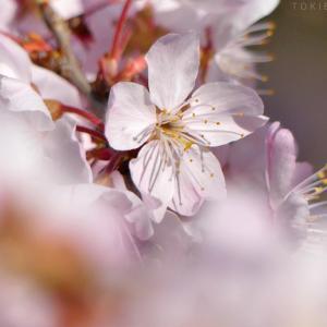 桜も月も... + 鉄の道 #24 ディスプレオケースにミニ・ジオラマ 2