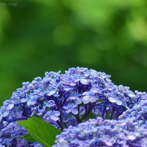 紫陽花の場所 #2