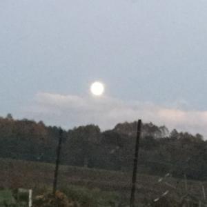 見事な満月  🌕