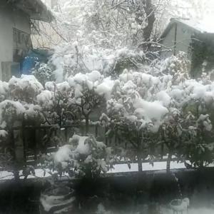 関東甲信、春の雪