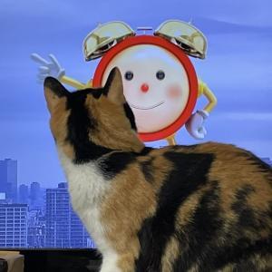 TVに反応するCalico cat