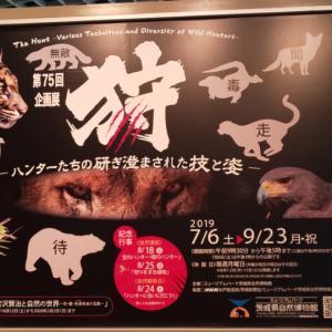狩り@茨城県自然博物館