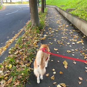 秋だなぁ。