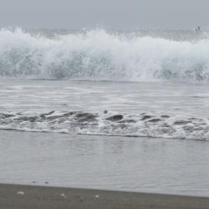 ウルトラシリーズ『大自然・海』 第1117話