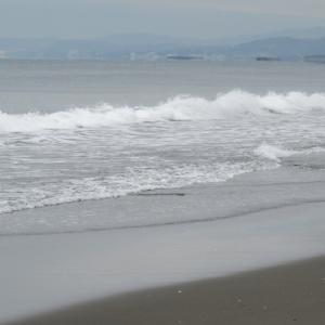 ウルトラシリーズ『大自然・海』 第1138話