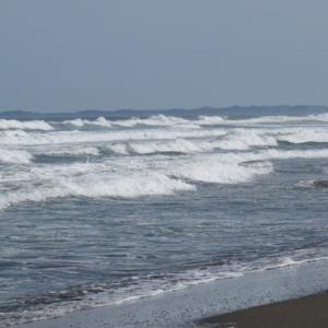 ウルトラシリーズ『大自然・海』 第1186話