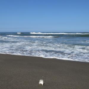 ウルトラシリーズ『大自然・海』 第1204話