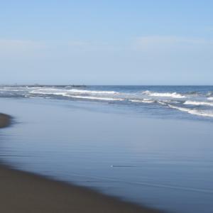ウルトラシリーズ『大自然・海』 第1300話