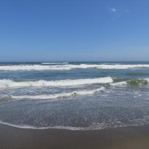 ウルトラシリーズ『大自然・海』 第1313話