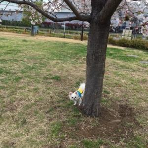 僕の好きな公園で