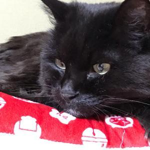 赤い座布団の上の猫