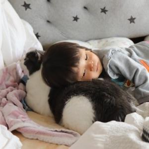 猫と子供の関係