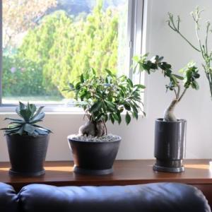 観葉植物達とその植木鉢の近況
