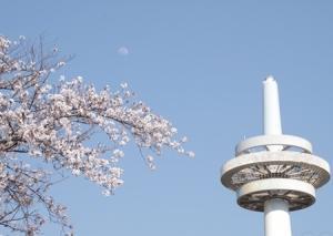 2020年4月 月齢11.0 桜と月