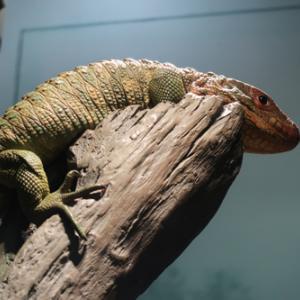 上野動物園とサンシャイン水族館