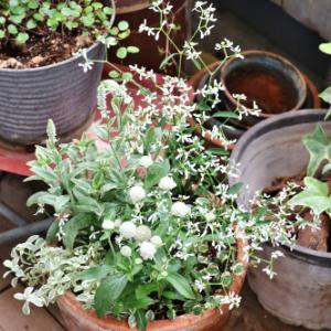 白い3種のお花を使った寄せ植え♪