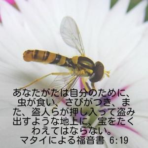 マタイによる福音書6章19節
