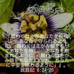 民数記6章24-26節(パッションフルーツの花)